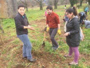 Plantación árboles arboles compensación huella de carbono